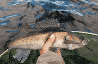 is-walleye-fish-healthy-to-eat-2